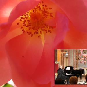 Rosen in Musik und Literatur